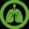 Система дыхания и лор органы